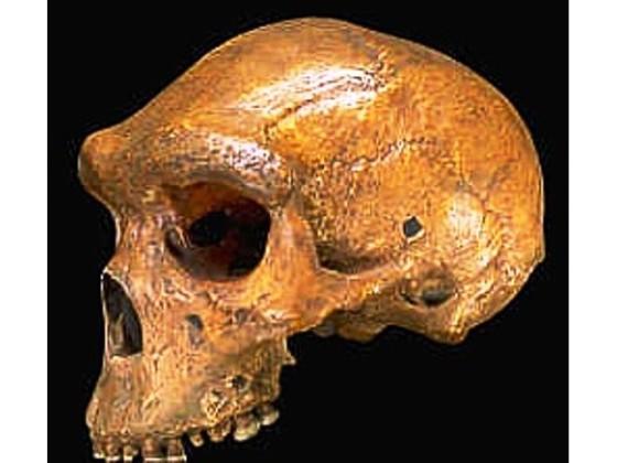 fosilele-enigmatice-ale-terrei-5686